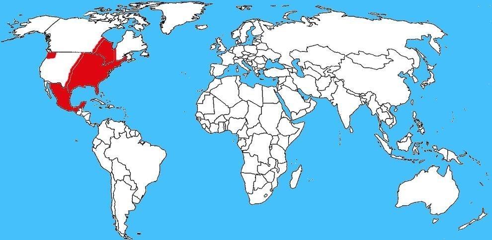 Mappa diffusione Vedova nera