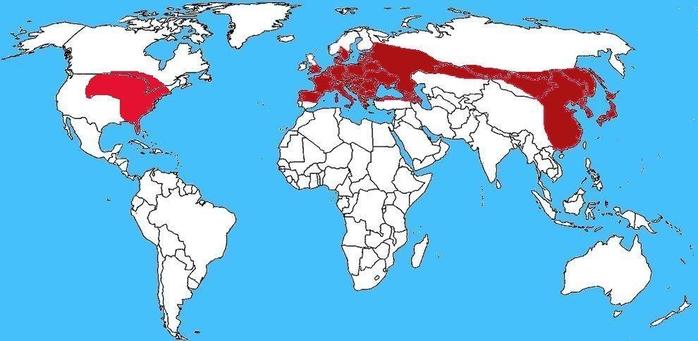 Mappa distribuzione Vespa crabro