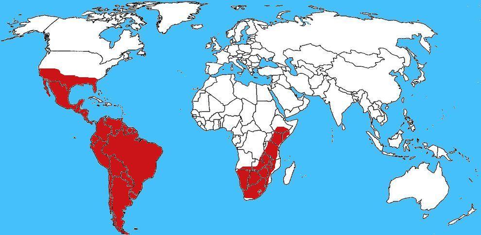 Diffusione Ape africanizzata - Apis mellifera scutellata