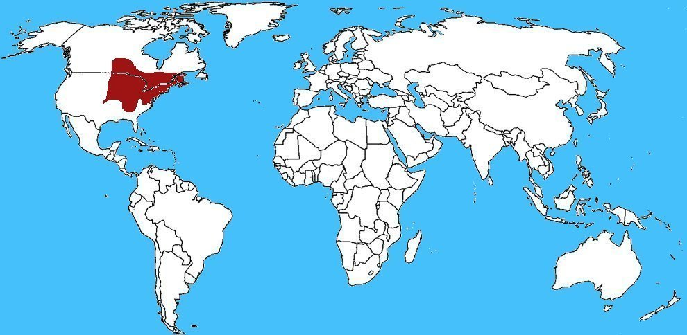 Mappa Diffusione Toporagno cosa corta americano - Blarina brevicauda