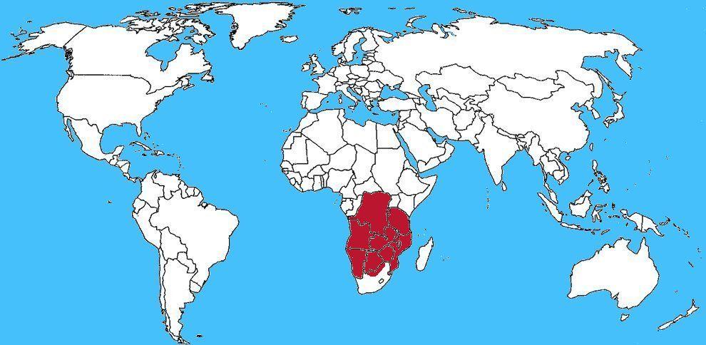 Diffusione Serpente ramoscello - Thelotornis capensis