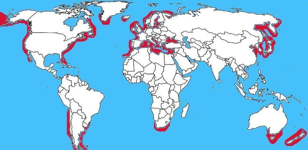 Mappa diffusione Squalo spinarolo - Squalus acanthias