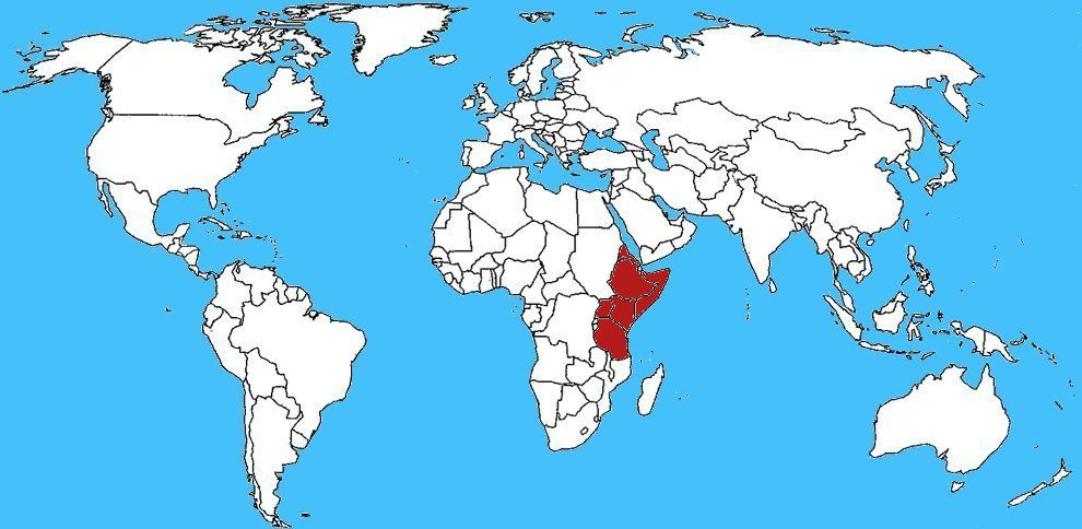 Mappa diffusione King baboon spider - Pelinobius muticus