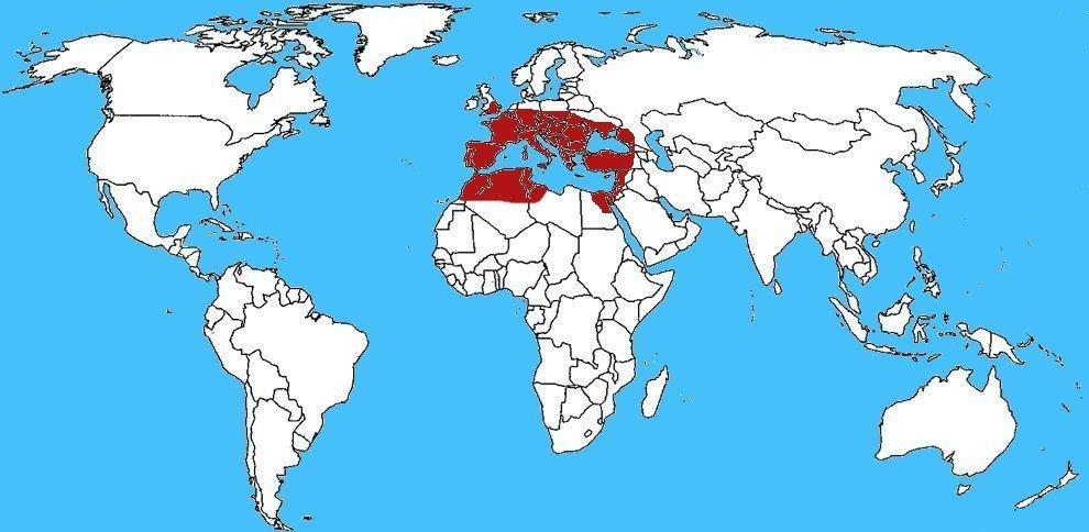 Mappa distribuzione Ragno Segestria florentina