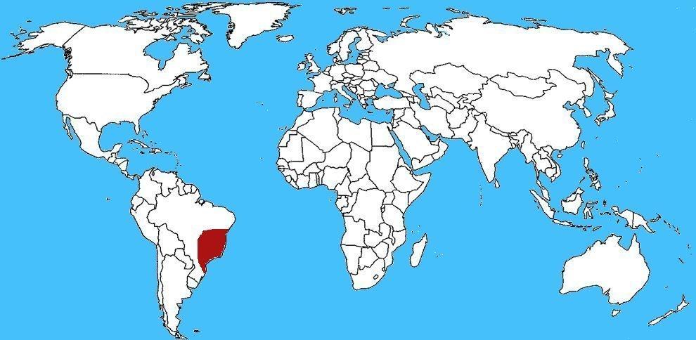 Mappa diffusione Scorpione giallo brasiliano - Tityus serrulatus