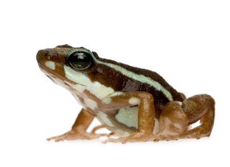 Leggi la notizia di misterloto su https://www.animali-velenosi.it/rane/epipedobates-tricolor/