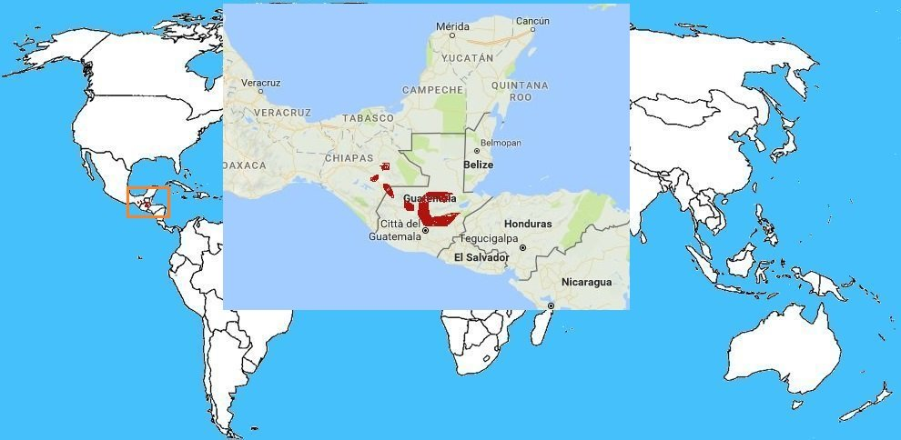 Mappa diffusione Vipera Macchiata delle Palme - Bothriechis aurife