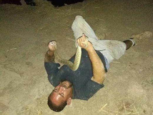Morso da un serpente a sonagli mentre tenta di cucinarlo