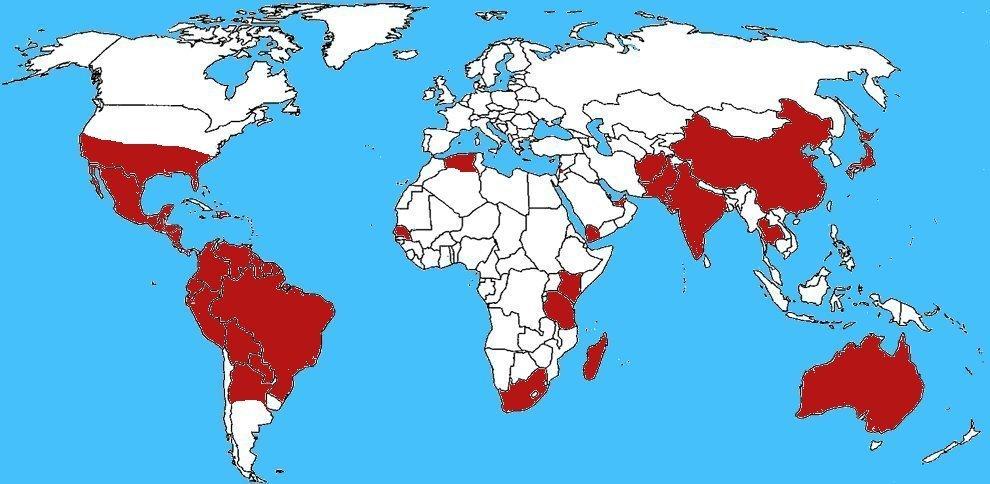 Mappa diffusione Latrodectus geometricus - Vedova marrone