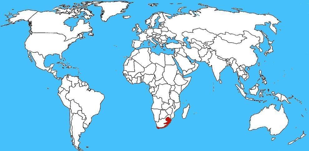 Mappa diffusione Sputatore del Sudafrica - Hemachatus haemachatus