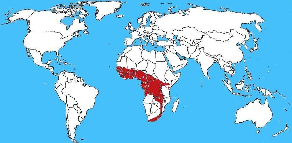 Mappa diffusione Naja melanoleuca - Cobra della foresta