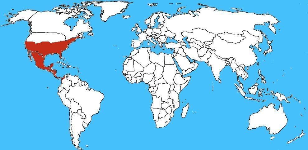 Mappa diffusione Peucetia viridans - Ragno lince verde