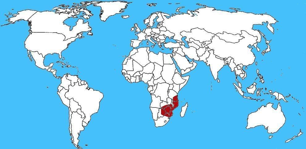 Mappa diffusione Naja mossambica - Cobra sputatore del Mozambico