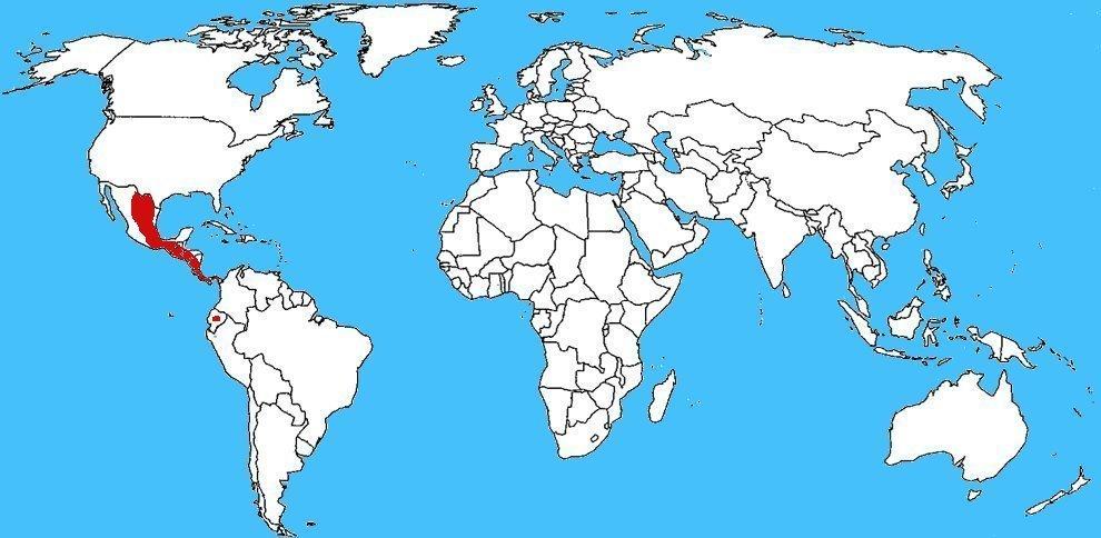 Mappa diffusione Cupiennius salei - Ragno errante tigre