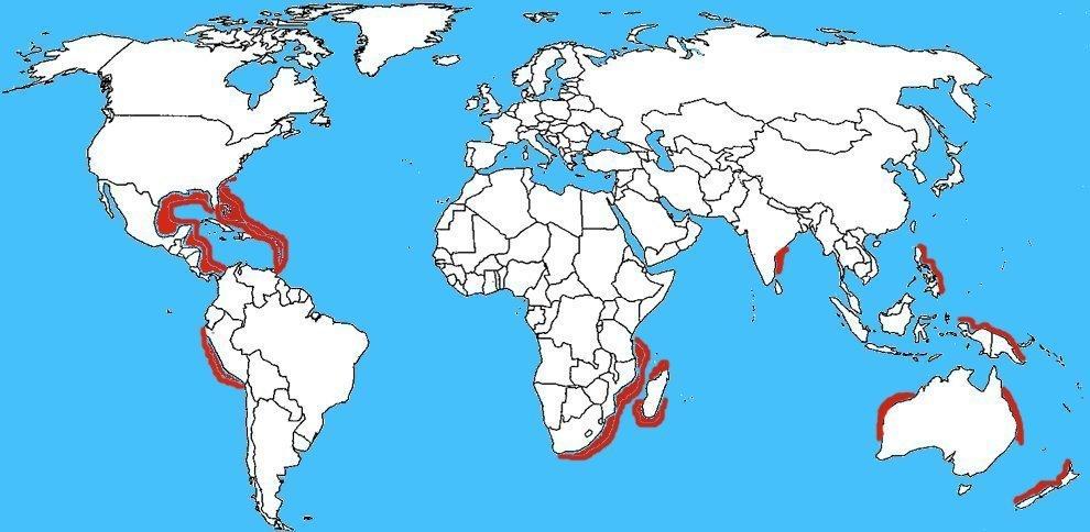 Mappa diffusione Drago blu - Glaucus atlanticus