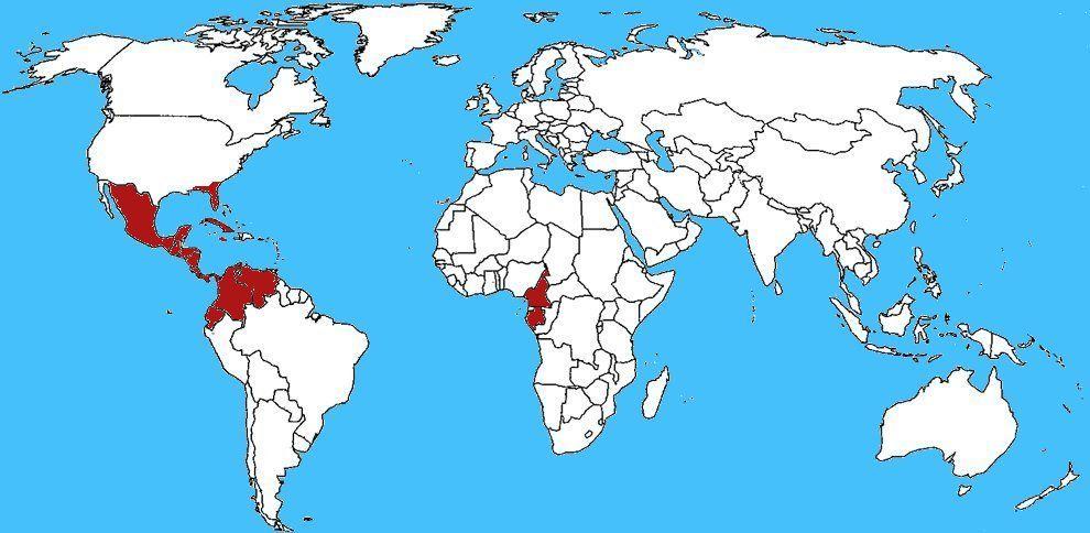 Mappa diffusione Centruroides gracilis - Scorpione blu
