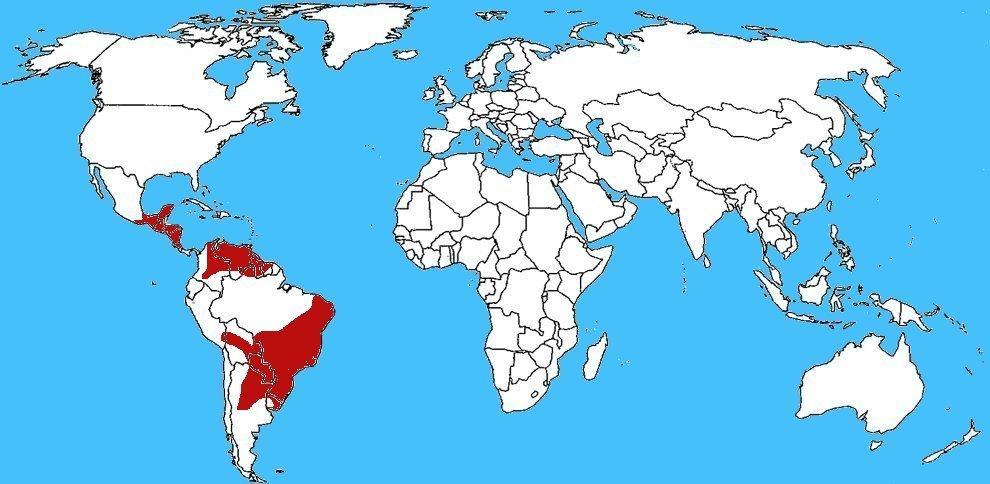 Mappa diffusione Serpente cascavel - Crotalus durissus