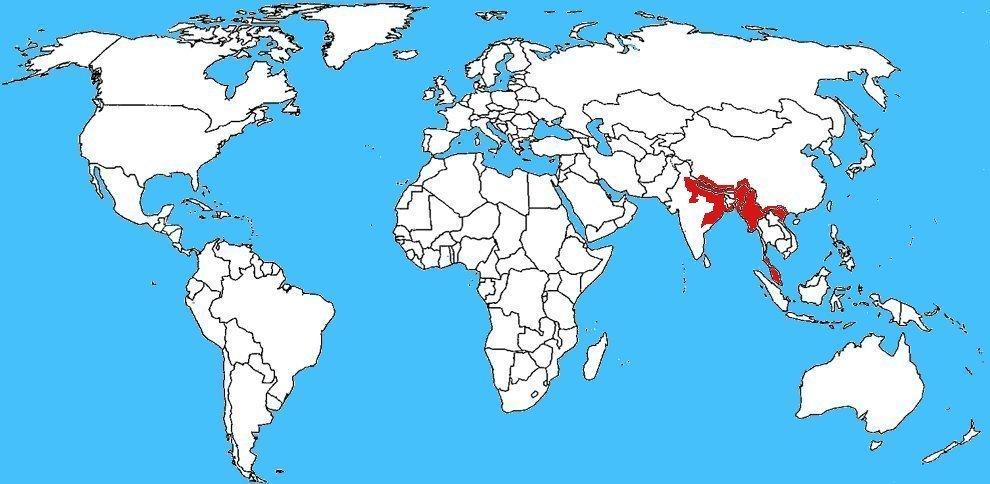 Mappa diffusione Cobra Monocolo – Naja kaouthia