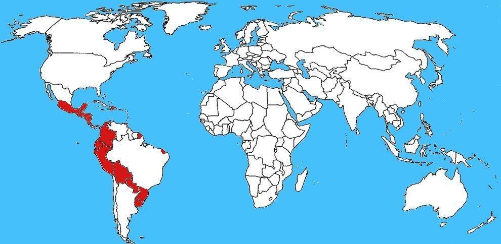 Mappa diffusione Vespa Camoati - Polybia occidentalis