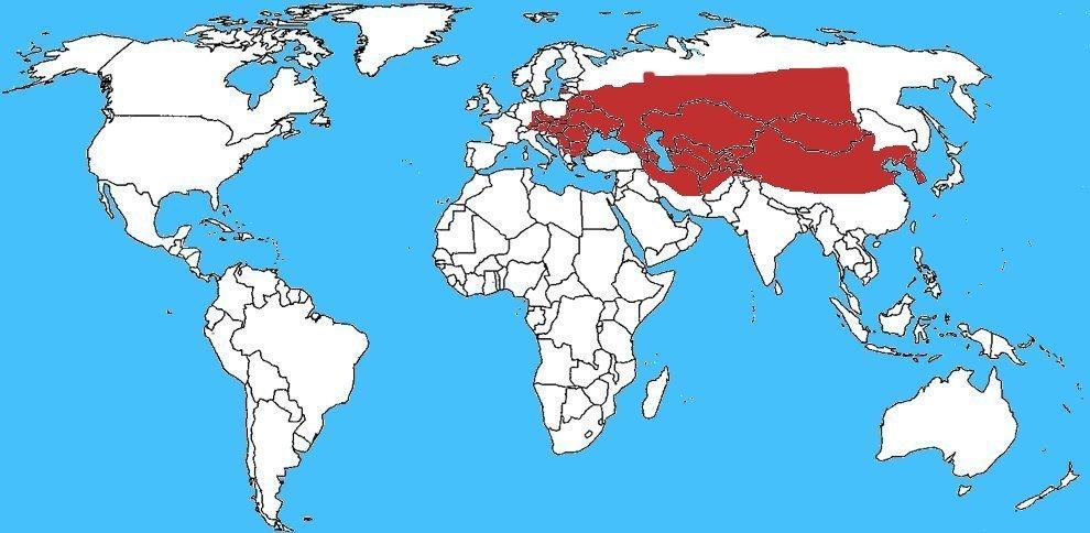 Mappa diffusione Lycosa singoriensis - Ragno lupo cinese