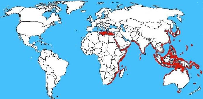 Mappa diffusione Pesce gatto dei coralli - Plotosus lineatus