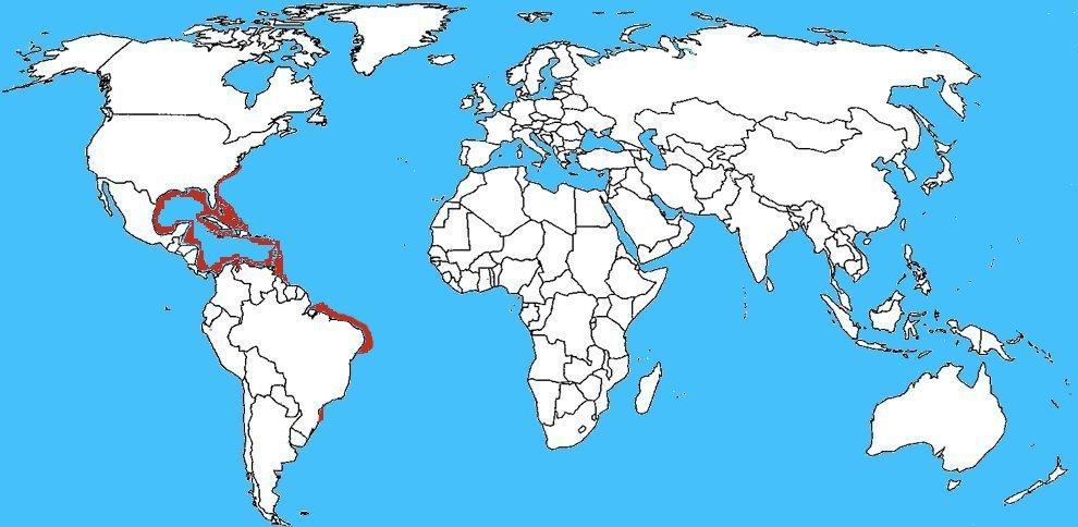 Mappa diffusione Cassiopea xamachana – Medusa capovolta