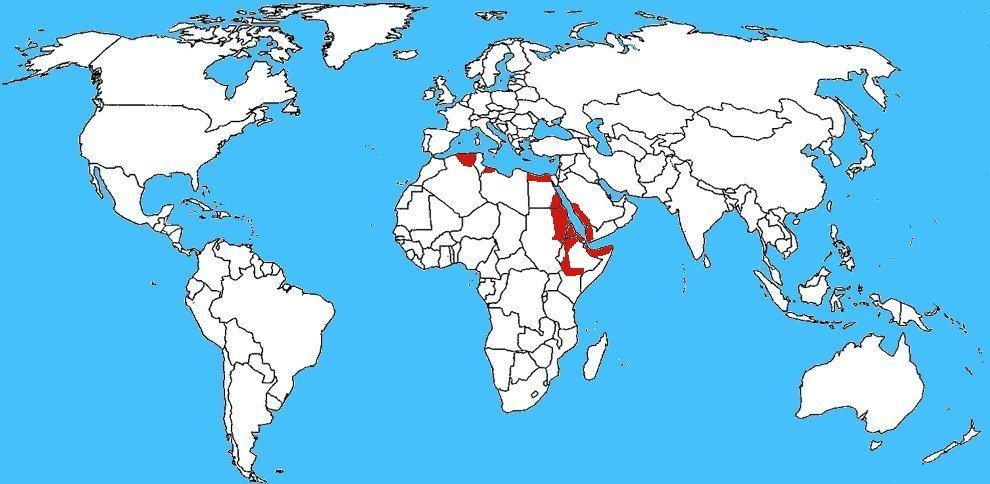 Mappa diffusione Echis pyramidum - Vipera delle piramidi