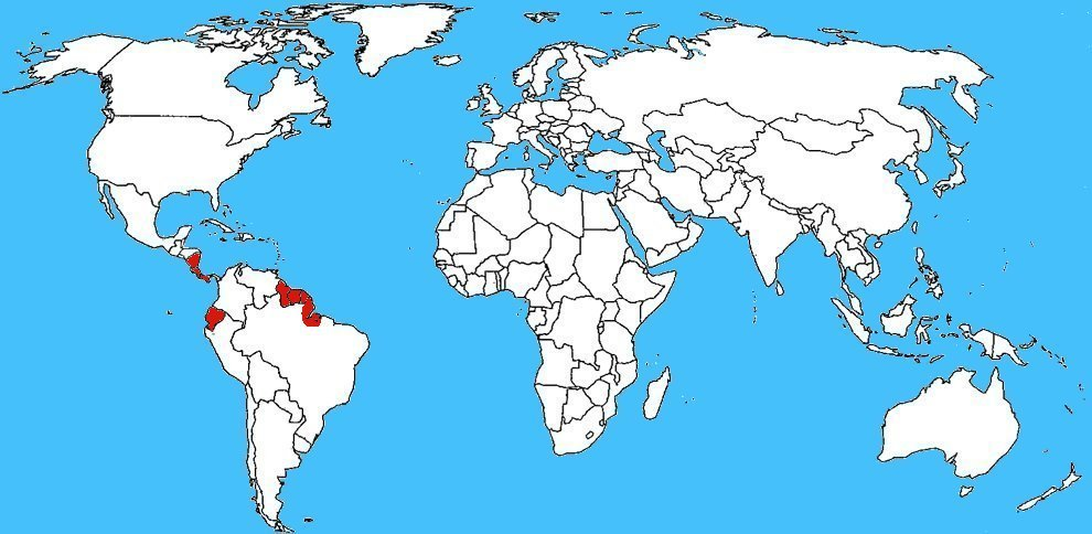 Mappa diffusione Tityus obscurus, lo scorpione oscuro