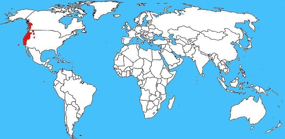 Mappa diffusione Taricha granulosa - Tritone dalla pelle ruvida