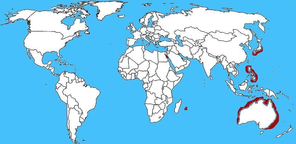Mappa diffusione Astropecten polyacanthus - Stella marina a pettine
