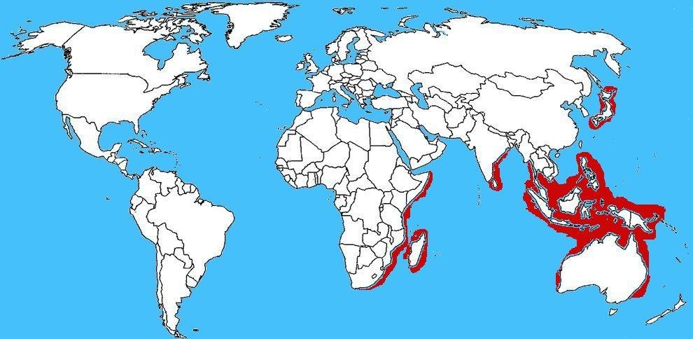 Mappa diffusione Zosimus aeneus