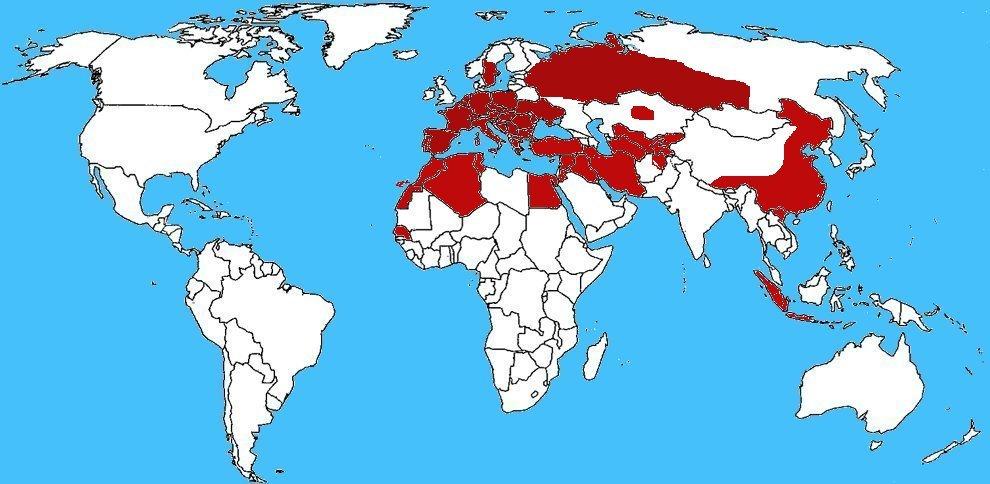 Mappa diffusione Ragno vespa - Argiope bruennichi