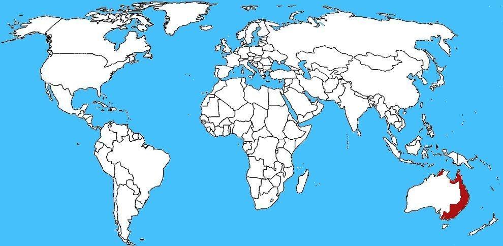 Mappa diffusione Missulena bradleyi - Ragno topo orientale