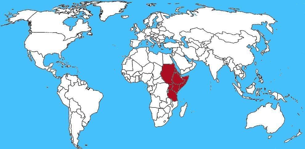 Mappa diffusione Topo dalla criniera - Lophiomys imhausi