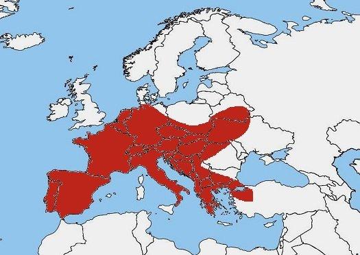 Mappa diffusione Salamandra pezzata- Salamandra salamandra