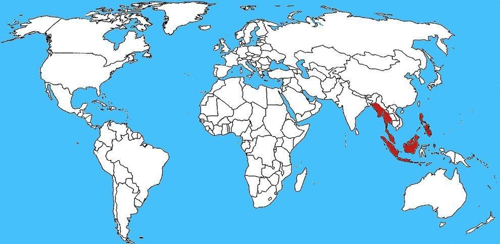 Mappa diffusione Serpente volante del paradiso - Chrysopelea paradisi